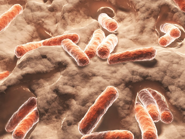 Bacilli are a class of bacteria containing several well-known pathogens.